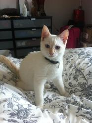 Bartleby, chat Gouttière