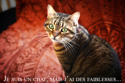 Basalte, chat
