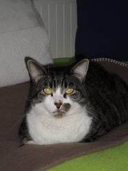Basile, chat