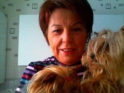 Basile, chien Yorkshire Terrier