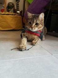 Bastet, chat