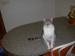 Bastet, chat Gouttière