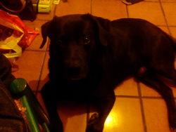 Baxter, chien