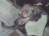 Baxter Au Paradis, chien
