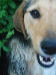 Baya, chien