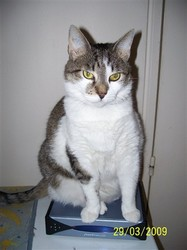 Baya, chat Gouttière