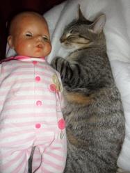 Rosabelle, chat Gouttière