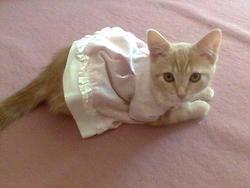 Kerry, chat Gouttière