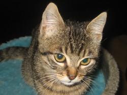 Nino, chat Gouttière