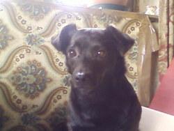Myrtille, chien