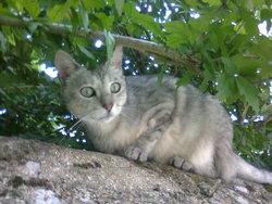 Pumba, chat Gouttière