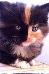 Beautée Bella Lejeune, chat