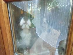 Bébé, chien Cavalier King Charles Spaniel