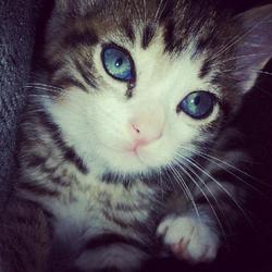 Bebe, chat Gouttière