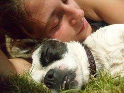 Becky, chien Bouledogue français