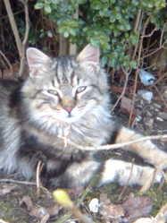 Mistinguette, chat Gouttière