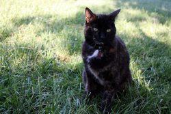 Bedaine, chat Gouttière