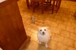 Beethoveen, chien