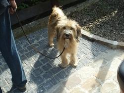 Beethoven, chien