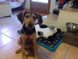 Bella, chien