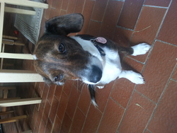 Bella , chien