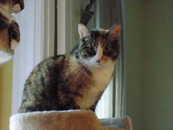 Bella, chat Gouttière