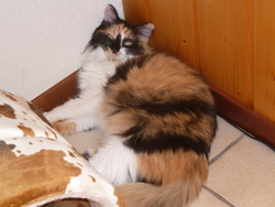 Belle, chat Gouttière