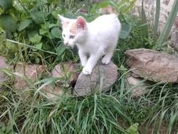 Ben, chat Gouttière