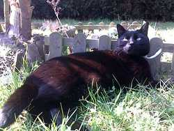 Benco, chat Gouttière