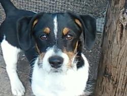 Benjy, chien