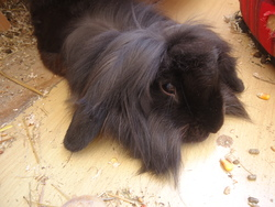 Benny, rongeur Lapin