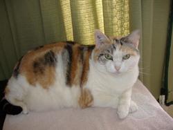 Bepsy, chat Gouttière