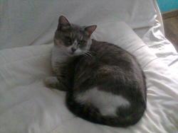 Berlingote, chat Gouttière