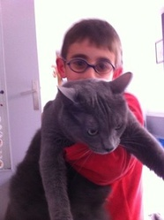 Berlioz, chat Chartreux