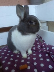 Berry, rongeur Lapin