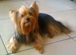 Betsy, chien