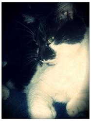 Betty, chat Gouttière