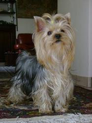 Betty, chien