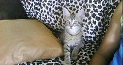 Léo, chat