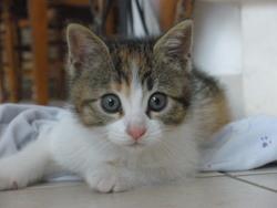 Eureka, chat Gouttière