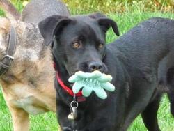 Moshi-Moshi, chien