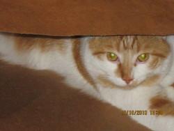 Ti-Ri, chat Gouttière