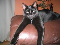 Binka, chat Gouttière