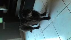 Bianca, chien