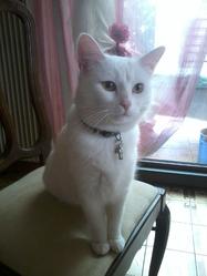 Bianca, chat Gouttière