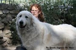 Bianca Du Mas De La Vallière, chien Chien de montagne des Pyrénées