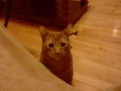 Bibi, chat Gouttière