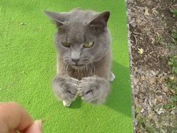Bibiou, chat Gouttière