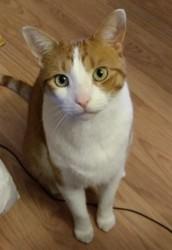 Bibitte, chat Gouttière