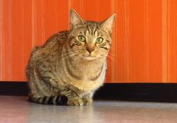Bibou, chat